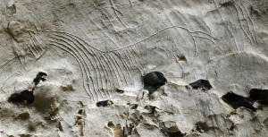 On peut voir un cheval gravé dans la grotte de Gouy (76), daté d'il y a